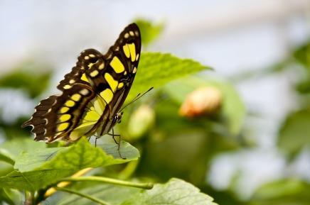 butterfly-1413529_960_720